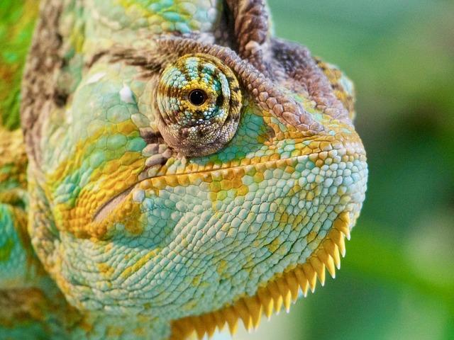 foto de um camaleão